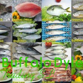 FROZEN FISHES FOR SALE